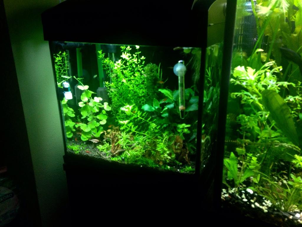 My nano 17 liters the planted tank forum for Plante nano aquarium