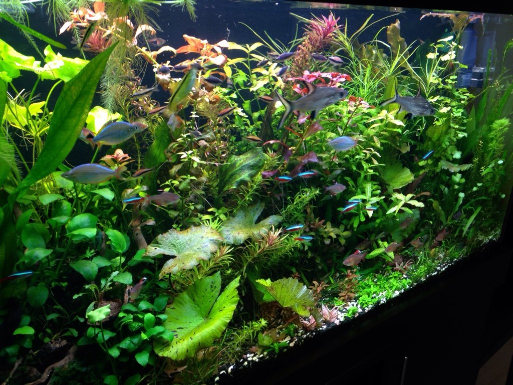 Amev aquarium the planted tank forum for Aquarium 120x40x50