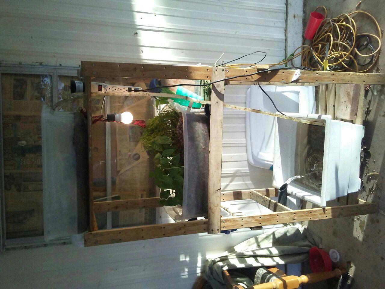 backyard aquaponics u2022 view topic phoenix arizona