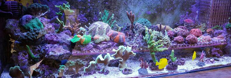 Conductivity Of Reef Tank : Reefing the australian way forums view topic glennf s