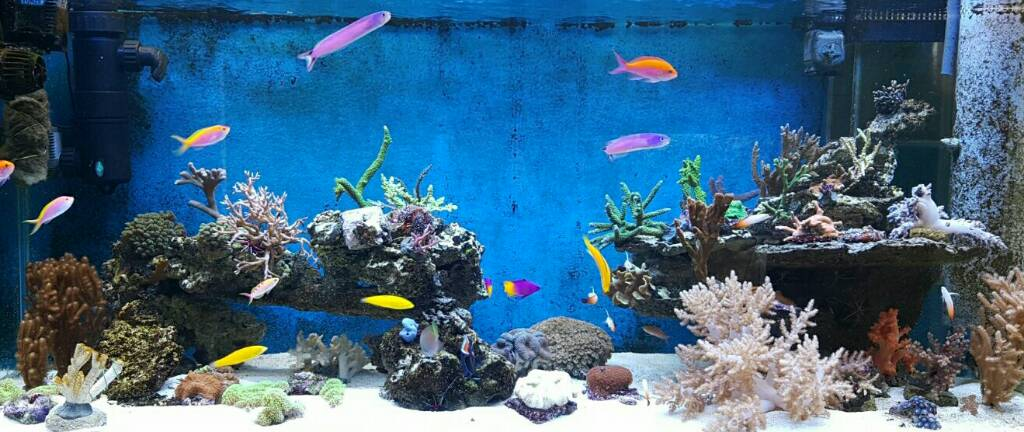 Conductivity Of Reef Tank : Glennf s liter mixed reef tank page
