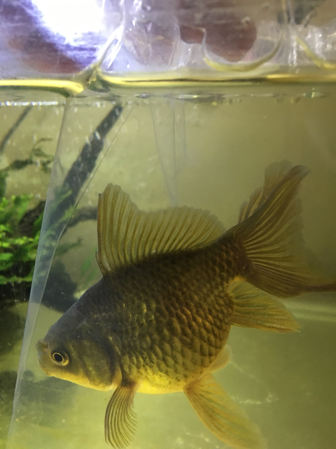 Fish aquarium price in bangalore -  Img