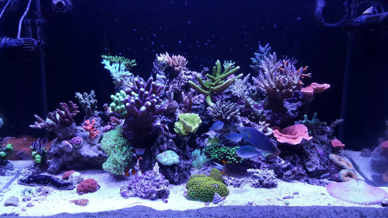 6 Bulb T5 Combo Best Color Growth Reef Central