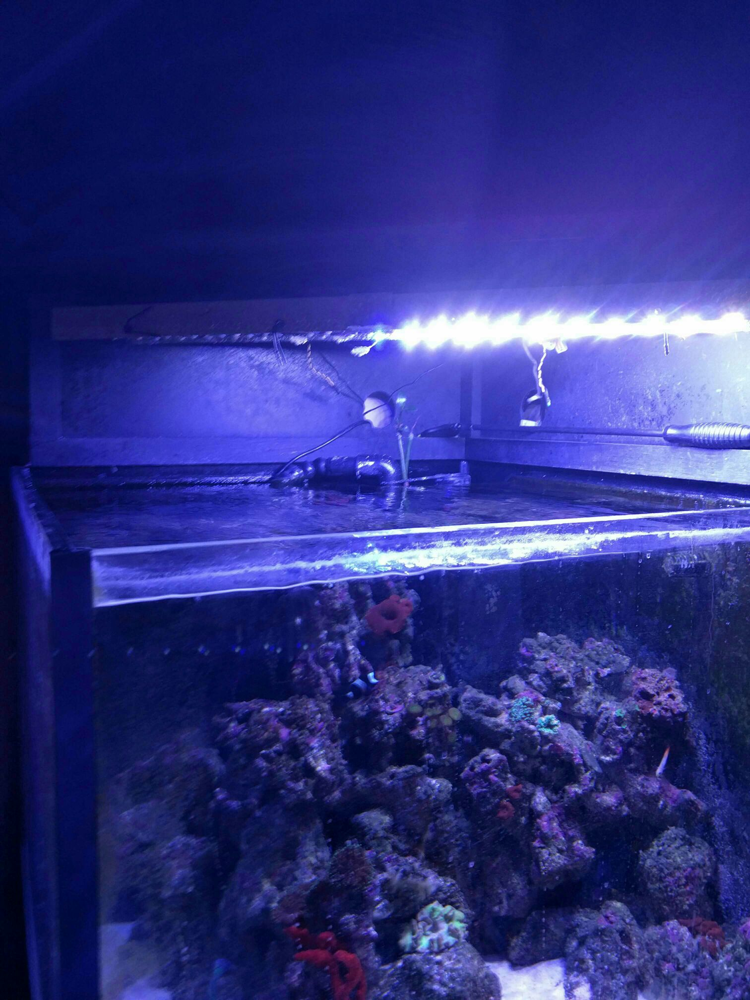 Mars Aqua Chinese LED review Ebay Page 49 Reef Central line
