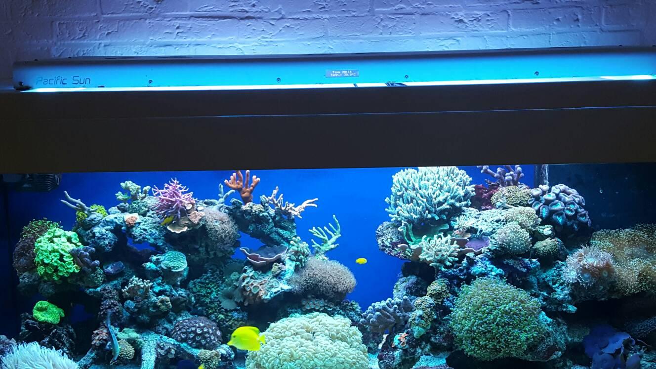 Utrecht zeer compleet zeeaquarium 160x60x50cm [archief ...