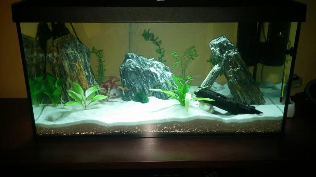 Pierwsze Akwarium 54l Ardek