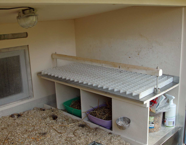 welche sitzstangen im gro en h hnerhaus gegen milben. Black Bedroom Furniture Sets. Home Design Ideas