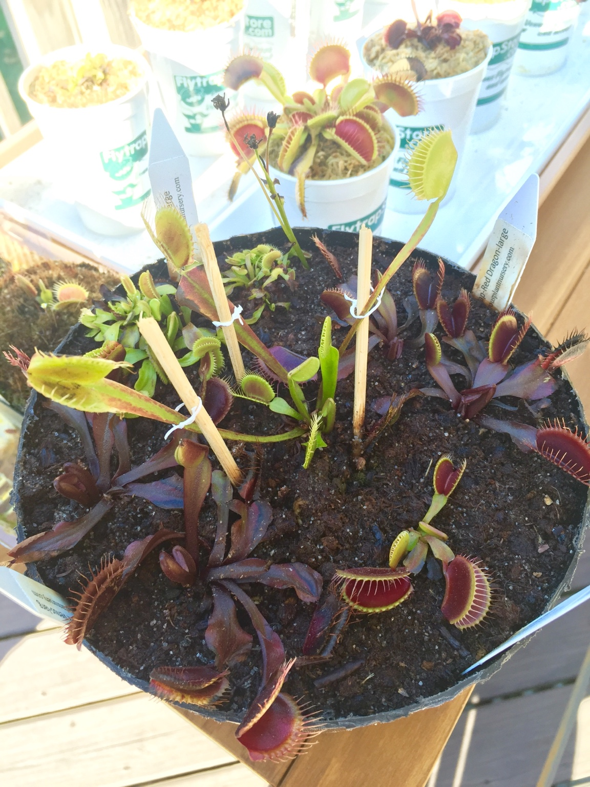 Lowes vft saved