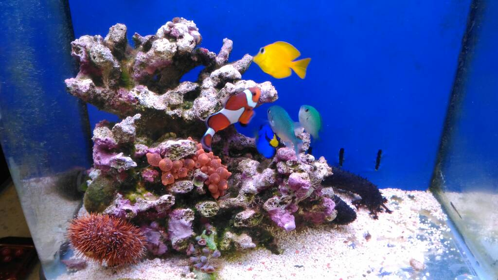 6g Uas Algae Scrubber Reef Tank Reef Central Online Community - Decor-uas