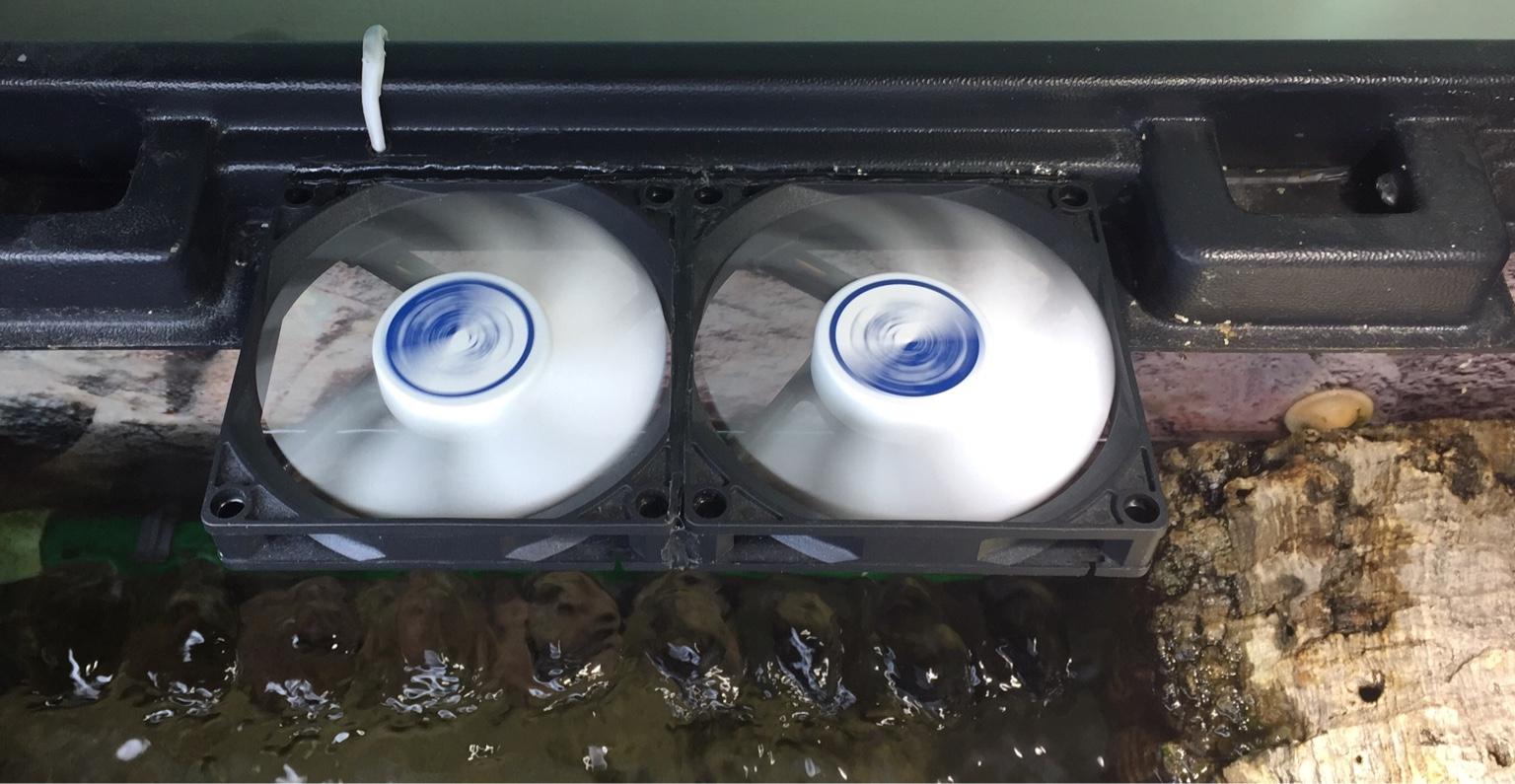 Temperatura acqua in estate for Termostato tartarughe acqua