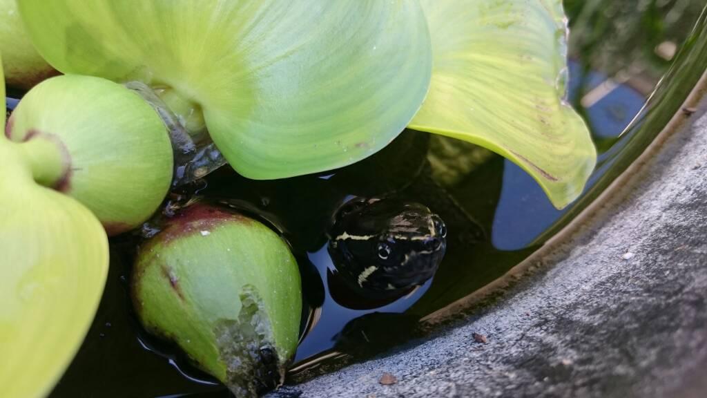 Consigli per laghetto filtro for Laghetto tartarughe inverno