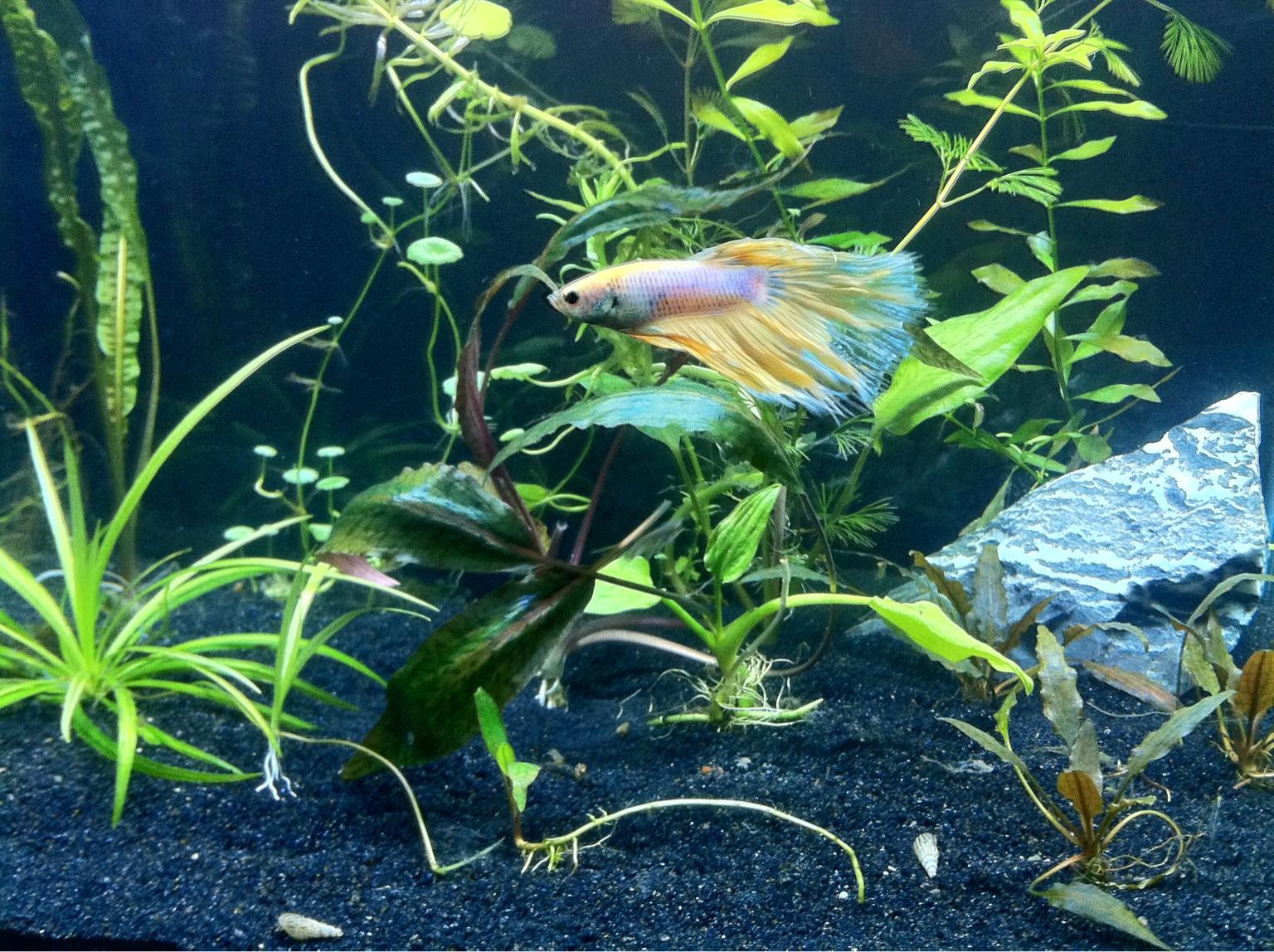 Fish aquarium identification - What Do You Use For Black Substrate Aquarium Advice Aquarium Forum Community