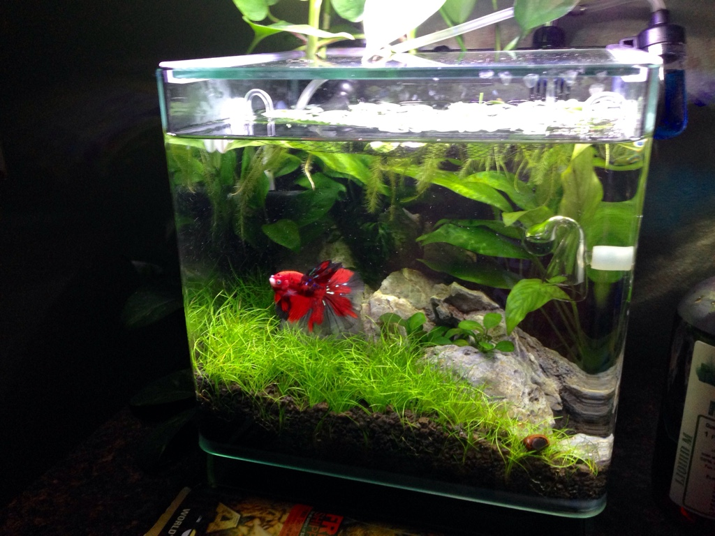 best automated mini co2 system the planted tank forum