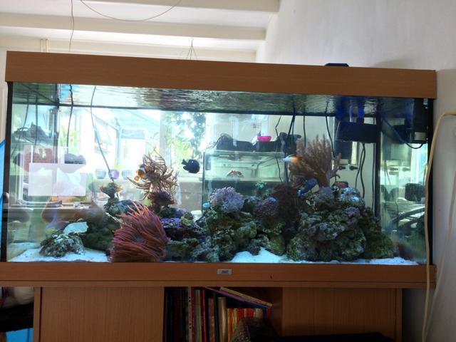 Zeeland Zoet  zeeaquarium te koop