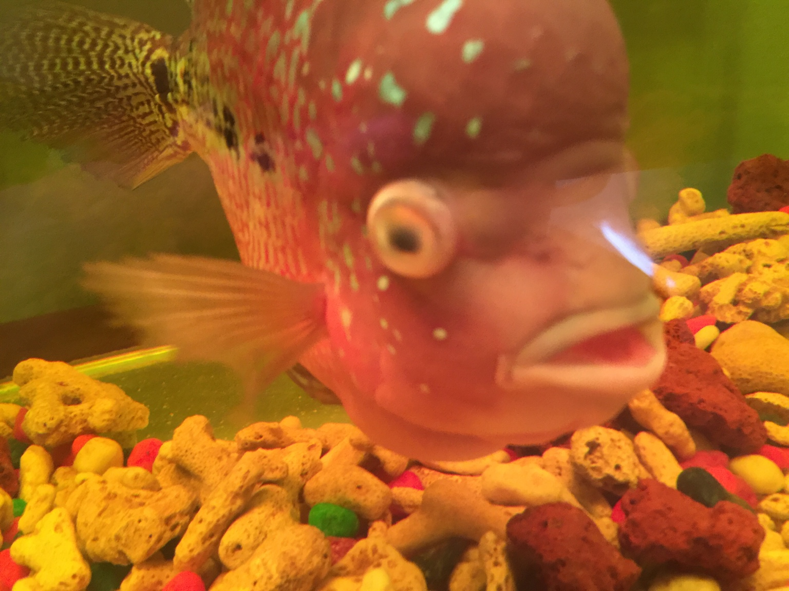 Freshwater fish cloudy eyes - Freshwater Fish Cloudy Eyes
