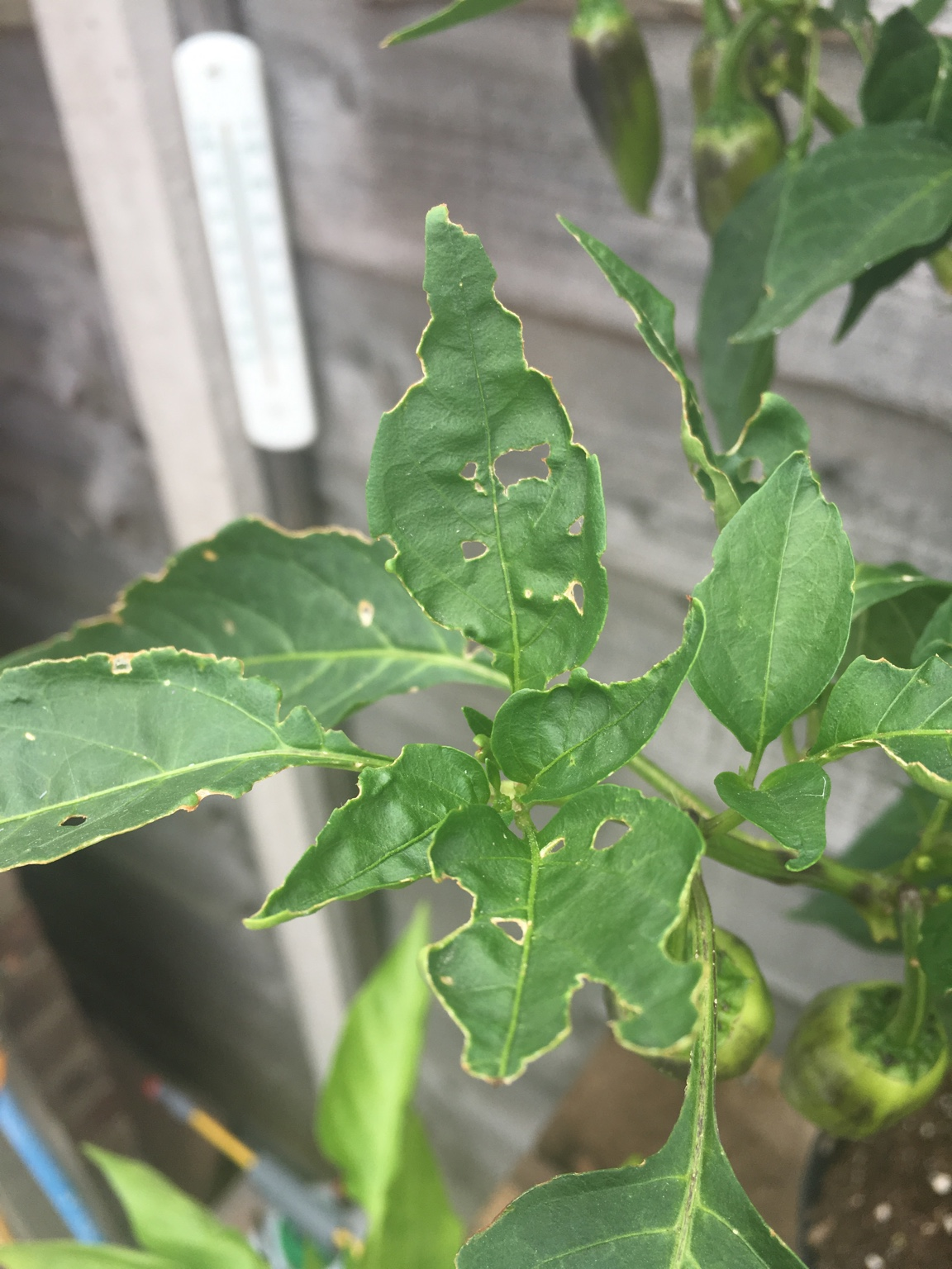 What's eating my plants!!