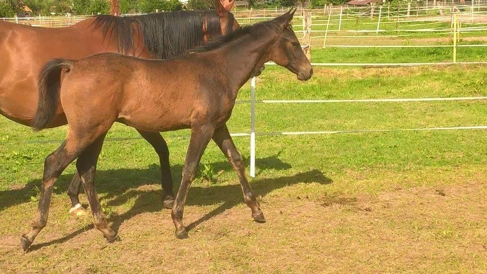 Exterieur beurteilung seite 122 for Exterieur beurteilung pferd