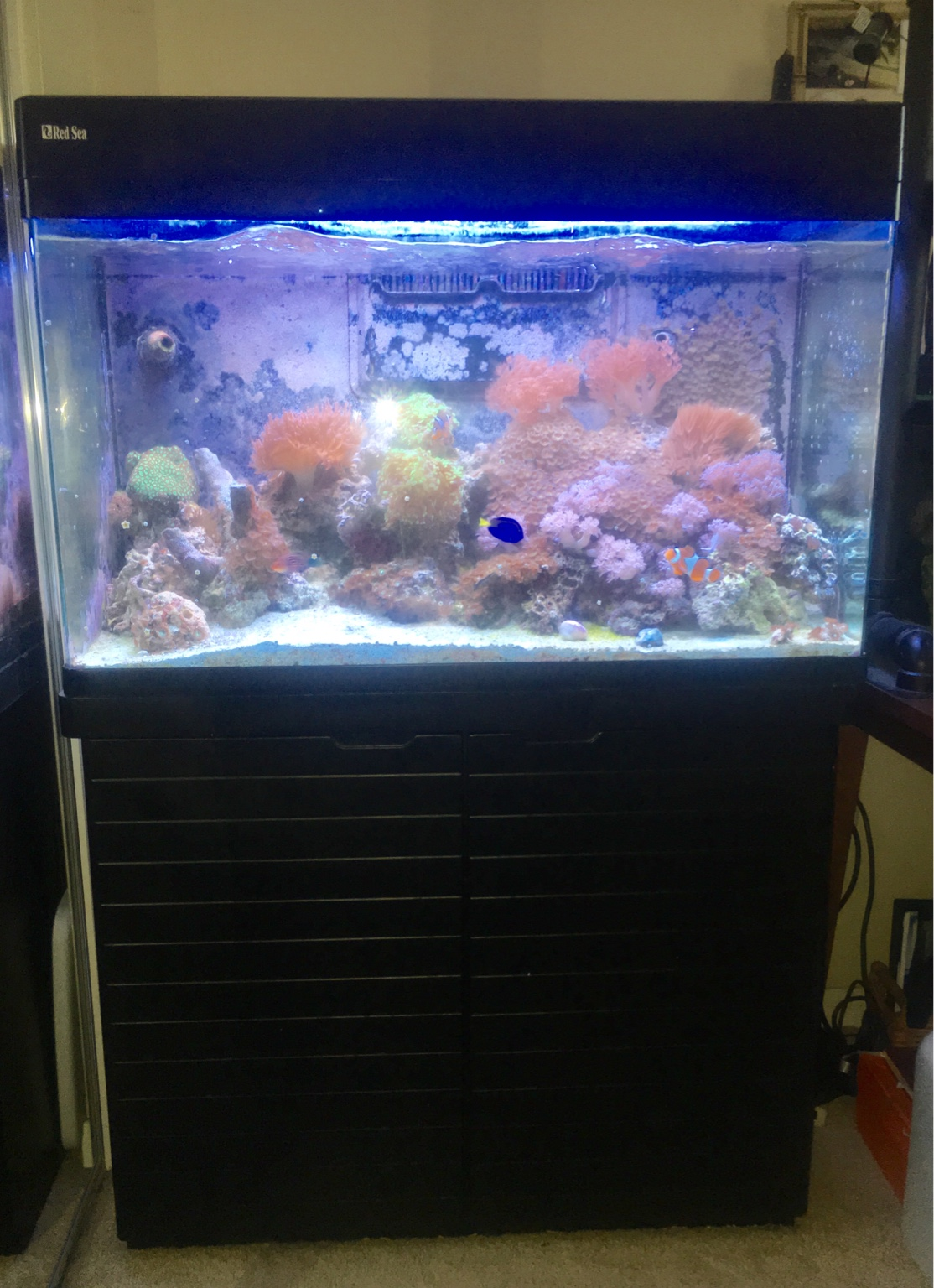faunaclassifieds view single post for sale aquarium 65. Black Bedroom Furniture Sets. Home Design Ideas