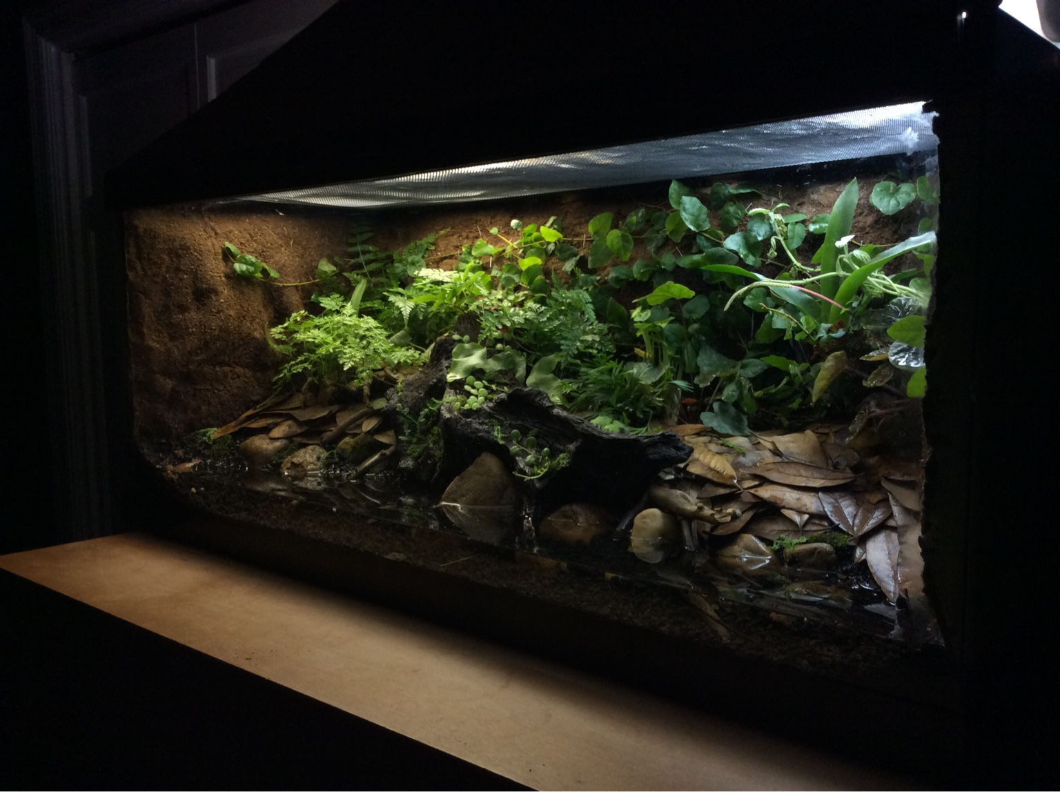 Simple 20 gallon paludarium - Dendroboard 10 Gallon Paludarium
