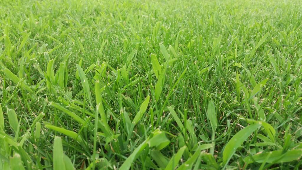 Erba che prende sopravvento su prato forum di - Quando seminare erba giardino ...