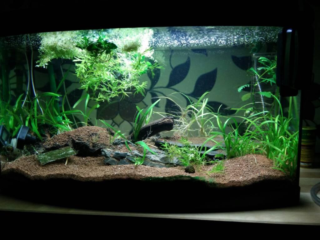 suche neues zuhause f r 60 liter aquarium aquarium forum. Black Bedroom Furniture Sets. Home Design Ideas