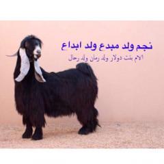 العارضي 4c64fee9ee0aa6a5a928