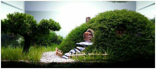 Can Anyone Please Help Me How To Make This The Hobbits Shire The Planted Tank Forum