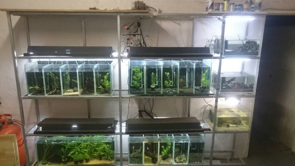 For Sale Shrimp Breeding Setup For Sale Apsa