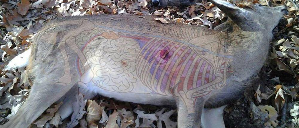 Deer Anatomy Perfect Shot Placement Bushcraft Usa Forums