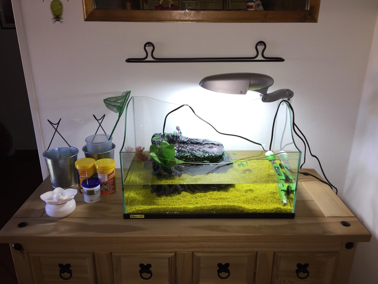 Alimentazione trachemys che non effettua basking for Riscaldatore per tartarughe
