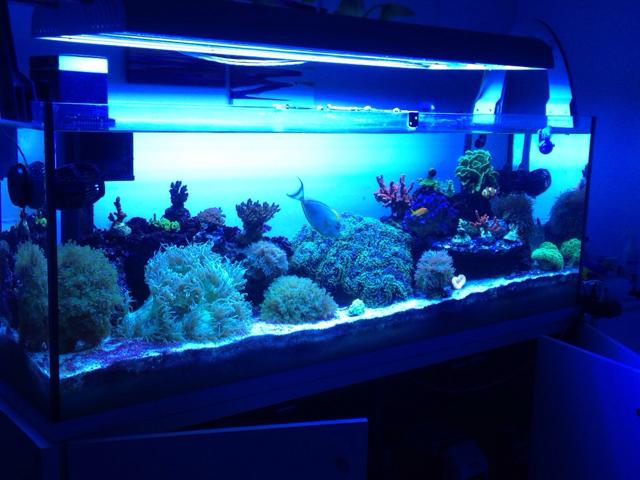 Plafoniere T5 Per Acquari Usate : Aquaristica liton 6 x 54w t5
