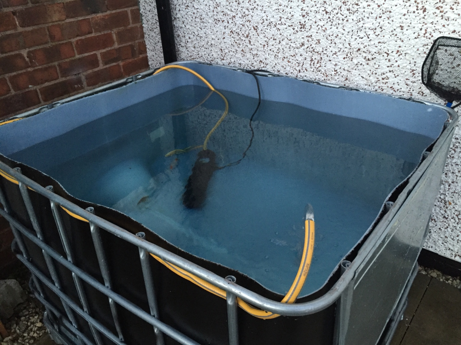 Ibc pond grow build new to fish keeping for Fish pond filter setup