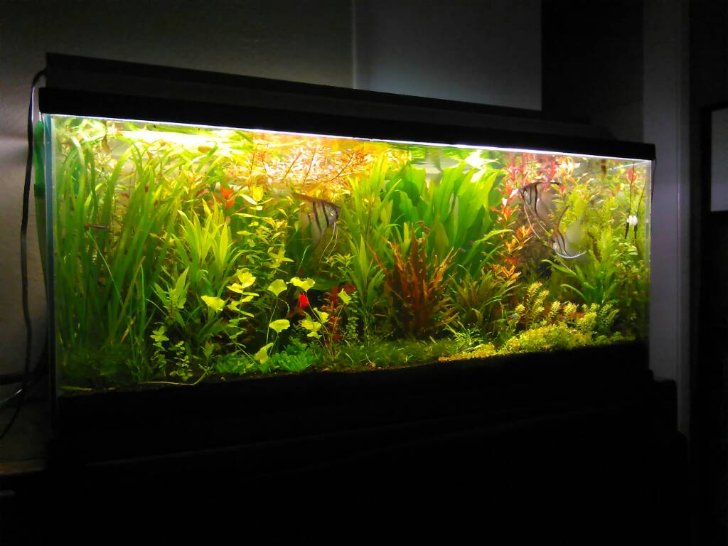 Clay Cat Litter Fish Tank Substrate