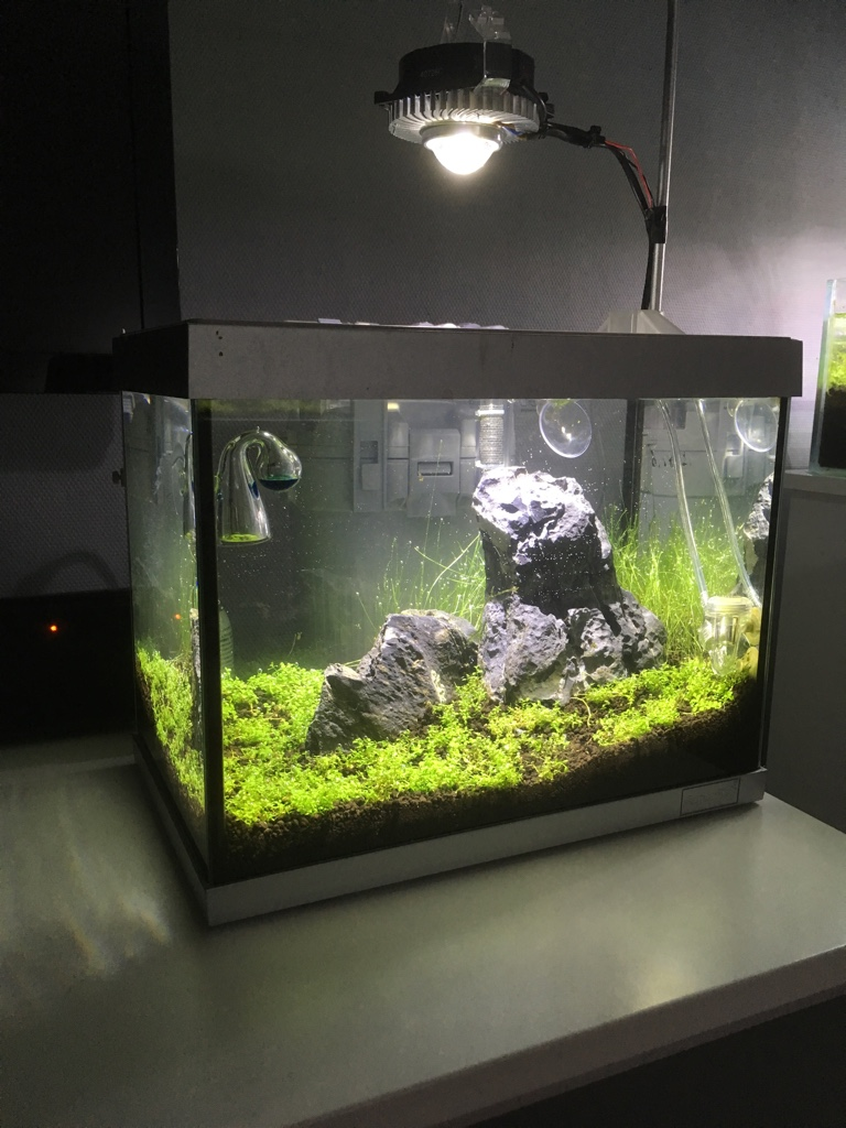 Aquascaping-forum • Toon onderwerp - Nieuwe setup 20L