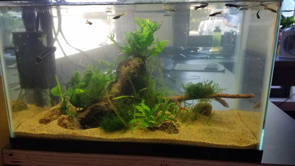 Office desk fish tank hostgarcia for Fish tank desk