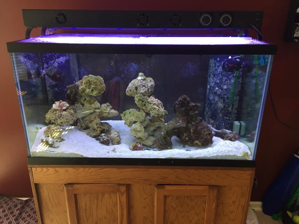 Sale 120 gallon tank dual overflows carolina fish talk for 200 gallon fish tank for sale