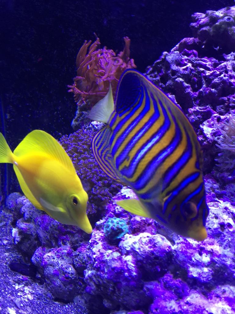 Apprehensive Seachem One Year Combo Alert Ph & Ammonia Marine Aquarium Use Brand New Fish & Aquariums