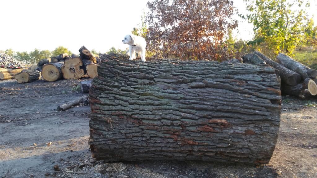 backyard lumberjack addicted to arboristsite