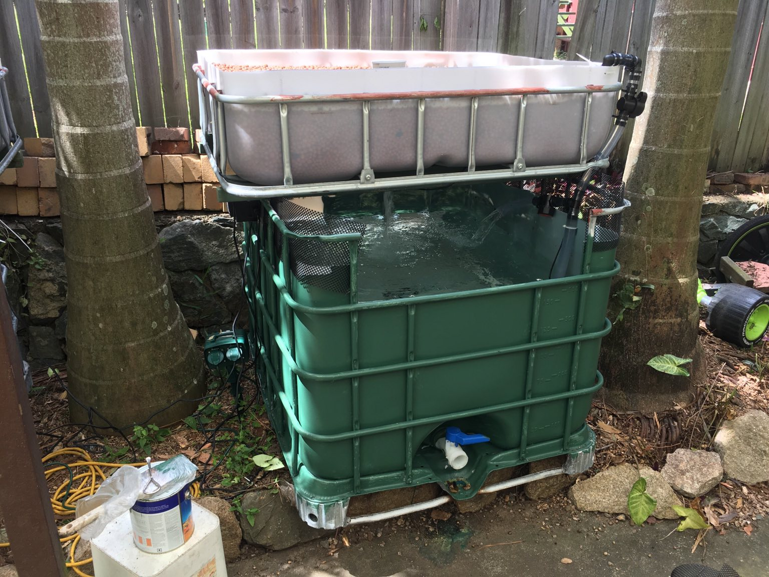 backyard aquaponics u2022 view topic escaping red claw