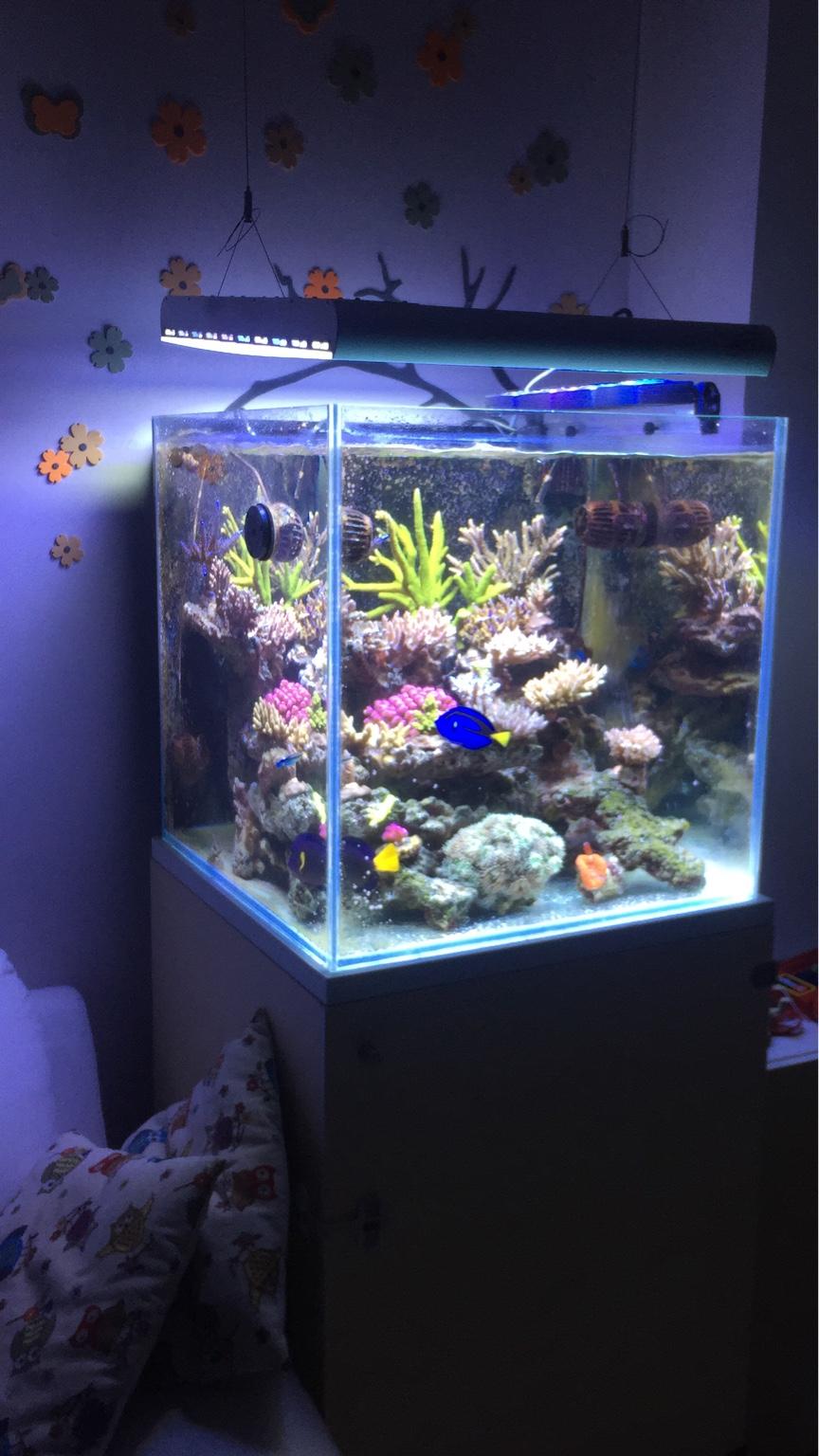 Prevendita cubo 60x60x60 il forum del magazine danireef for Acquario marino in vendita