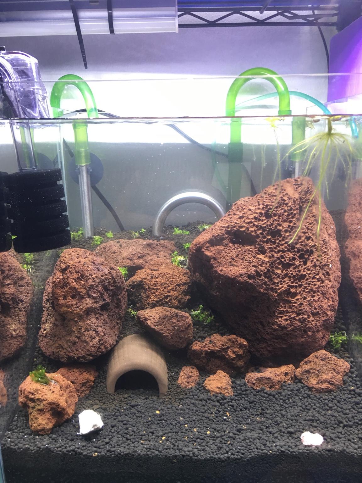 cheapest simple tank neo caridina shrimp set up guide
