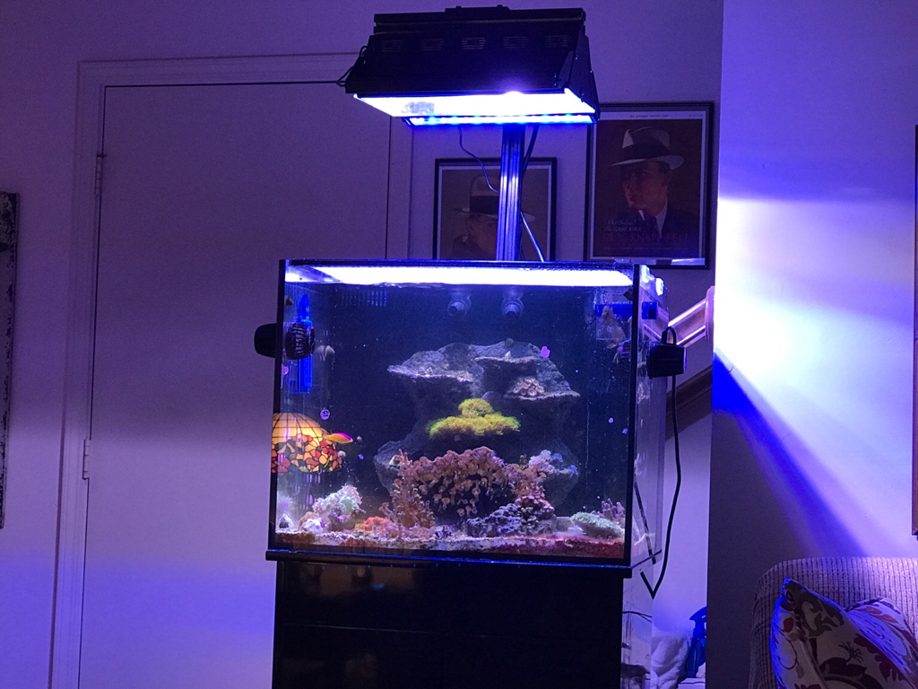 Another Back To Halides Thread Reef Central Online