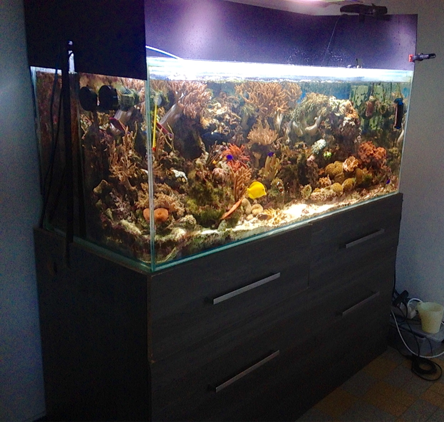 aquarium 540 litres tout quip vendre reef l man aquarium r cifal en suisse. Black Bedroom Furniture Sets. Home Design Ideas