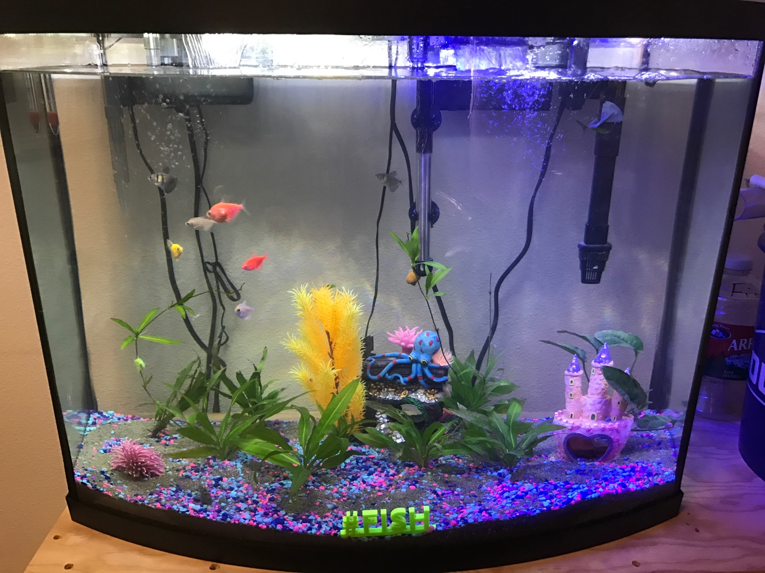 75 gallon start up 38 gallon bowfront 258432 for 38 gallon fish tank