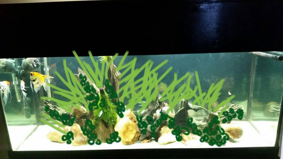 Java Fern And Anubias Aquascape The Planted Tank Forum