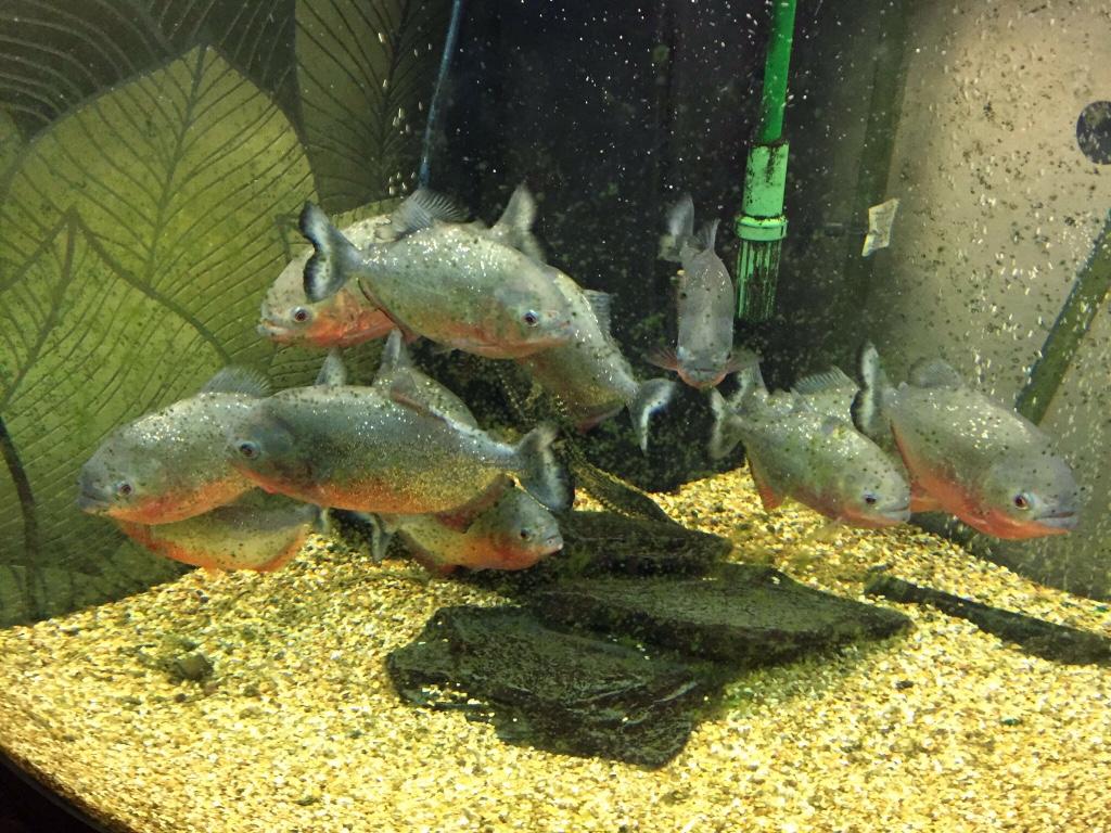Fish aquarium and good luck -  Tank Good Luck Img Img