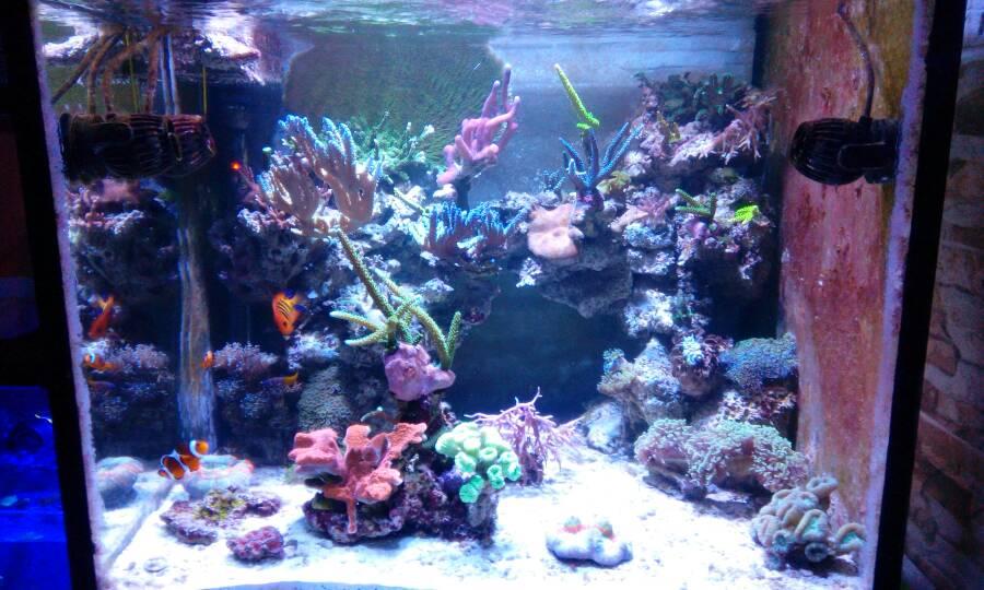Dismetto acquario for Acquario completo prezzi
