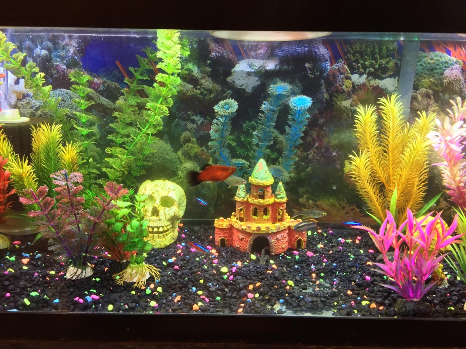 Freshwater aquarium fish water change - Cloudy Water After Water Change