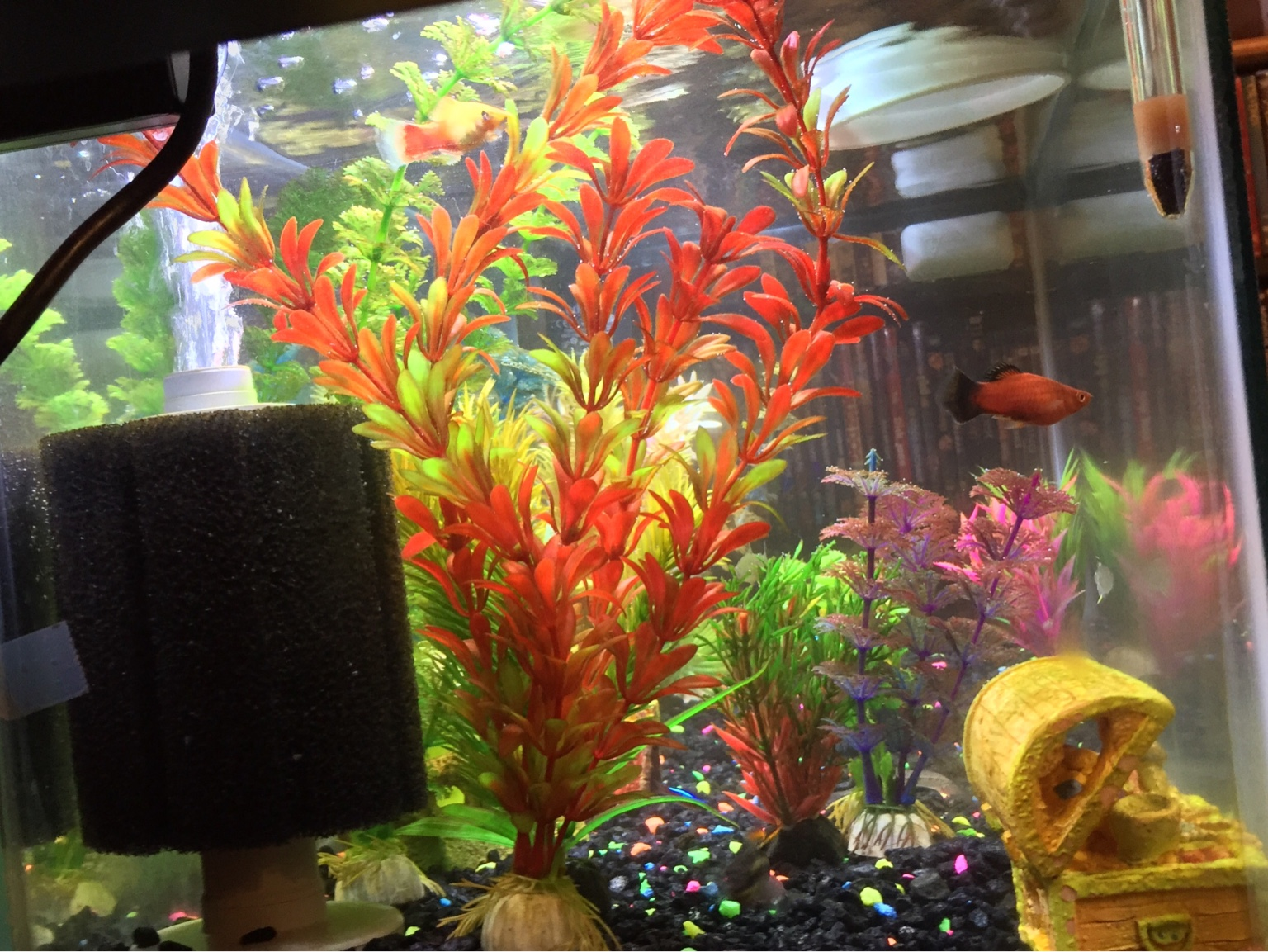 Freshwater aquarium fish water change -  Img