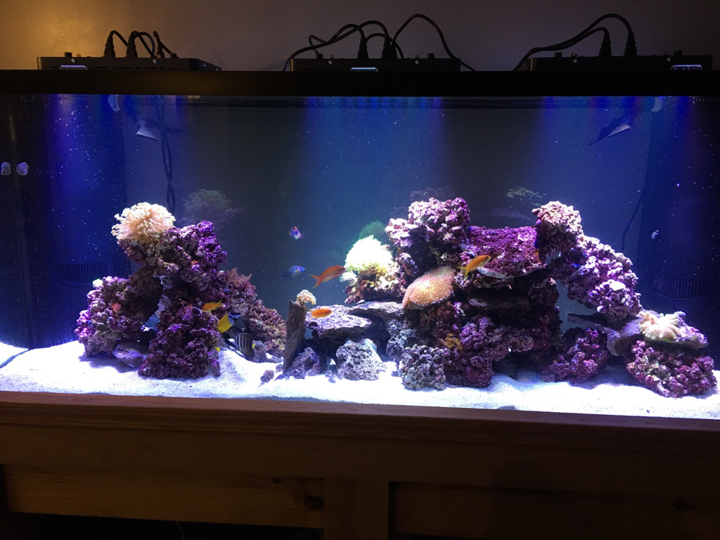 I Have A 220 Gallon Tank And Sump Filled With 30 Gallons Of Water Im Really Excited About The Jump To Mixed Reef From My Cichlid
